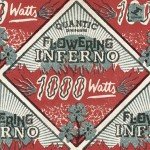 Flowering Inferno - 1000 Watts